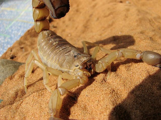 Envenenamiento causado por escorpiones » ESCORPIONPEDIA